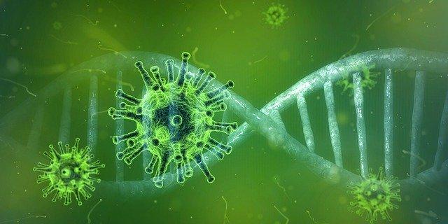 Coronavirus contacts checked in Amur region