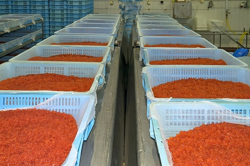 Smuggling of red caviar with the help of a policeman organized in Kamchatka