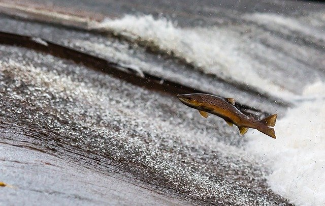 A fish hatchery wants to be included in the TOP