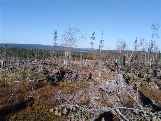 70 million illegal logging in the Irkutsk region