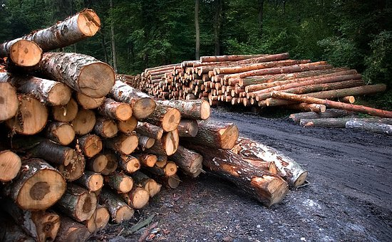 Ministry for the Development of the Russian Far East: the authorities refused to create a state corporation for the export of timber
