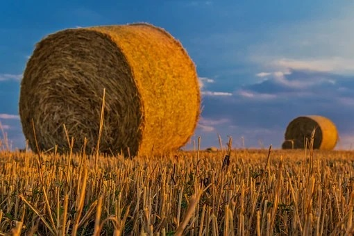 Investors show interest in agricultural projects in the Jewish Autonomous Region