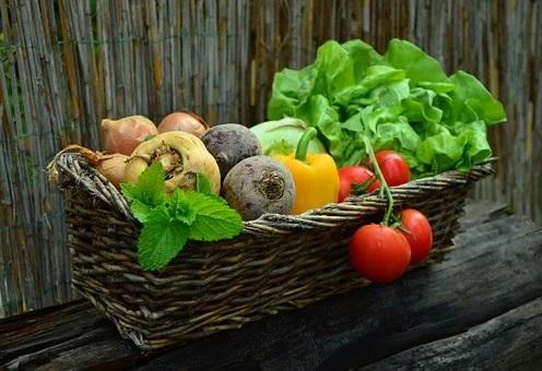 Mikhail Mishustin promised to support Chukotka vegetable growers