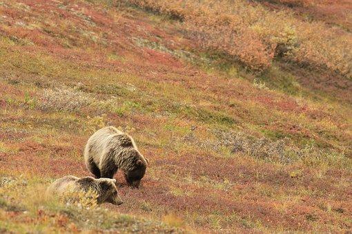 Surveyor on Sakhalin became a victim of a bear