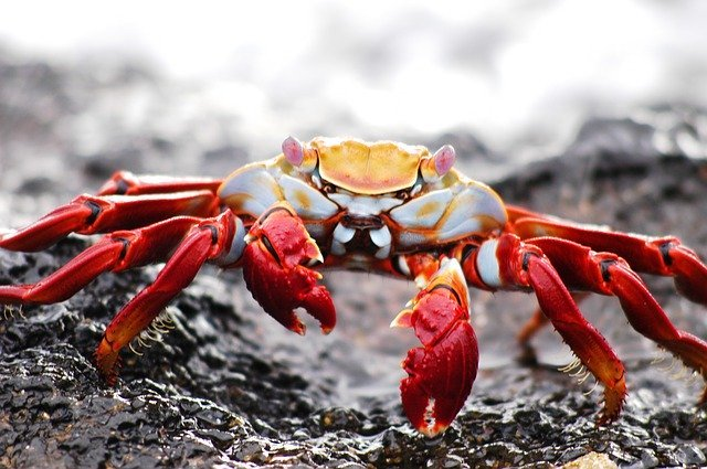 10 new vessels will be built for a coastal crab company