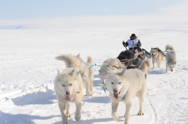 "Anniversary dog sled race ""Nadezhda"" started in Chukotka"
