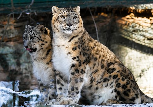 The zoo will open on August 1 in Khabarovsk