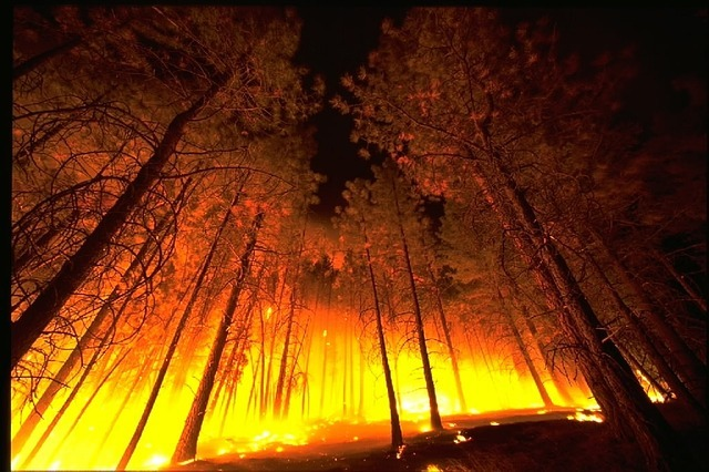 The first forest fires recorded in the Khabarovsk Territory
