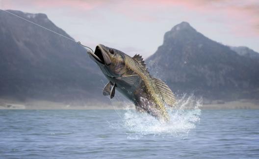 Fukushima sea bass shipments banned in Japan