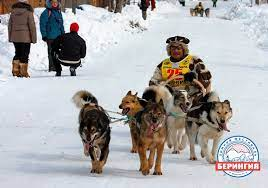 Rules for the carriage of dogs will be changed by Aeroflot for Beringia in Kamchatka