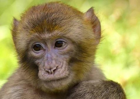 Zoos open in Transbaikalia