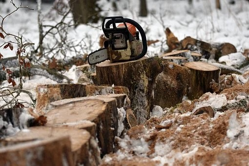 Trutnev: an increase in export duties on timber will help 100% domestic processing