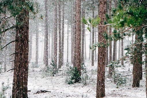 Forecasters spoke about the upcoming winter in the Far East