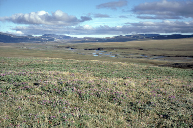 Far Eastern hectares snapped up in Chukotka