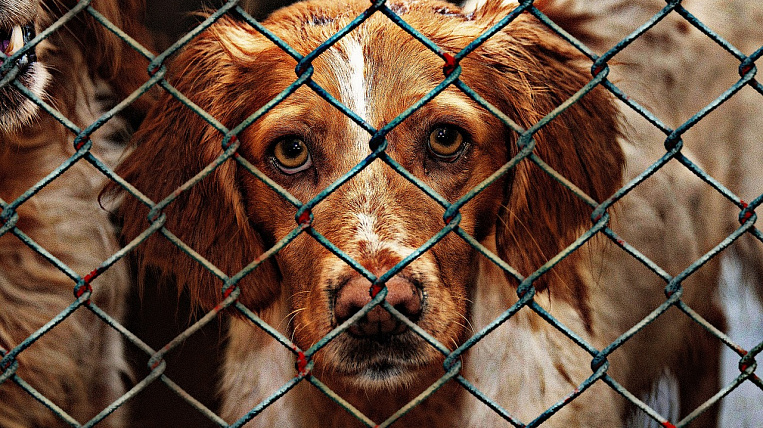 Expert: animals in a shelter in Yakutsk were killed by a suffocating drug