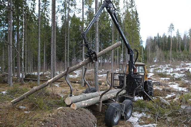 An experiment in the forest industry is being introduced in the Far East