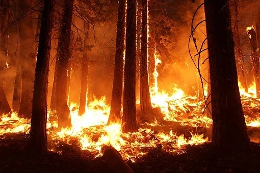 The head of the Ministry of Emergencies called the situation with forest fires in the Far Eastern Federal District critical