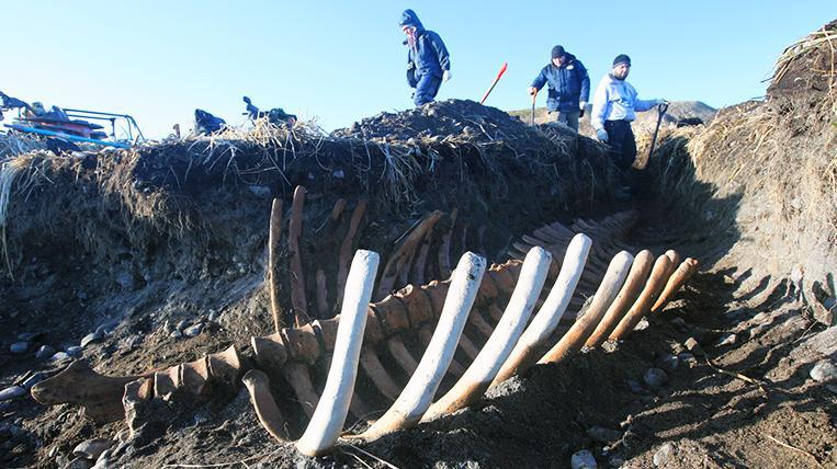 Leviathan of Bering Island