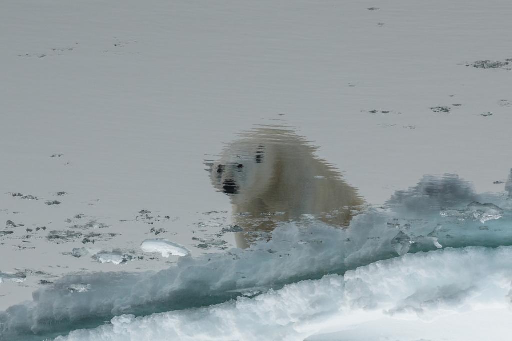 zhivotnye_Mikhail Nitishinsky, photo Reflection, Russian Arctic National Park, Franz Josef Land Archipelago, Arkhangelsk Region .jpg