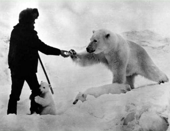 Photo from the archive of Ksenia Ozhinskaya_ Wrangel Island (6) .jpg