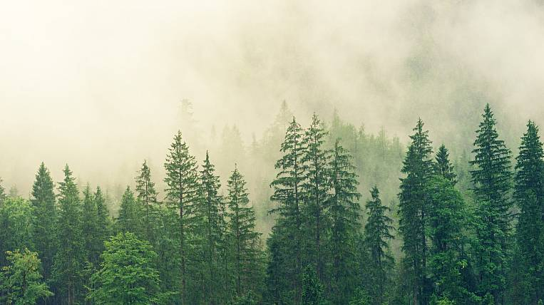 More than 3 thousand hectares of new forests planted in Transbaikalia