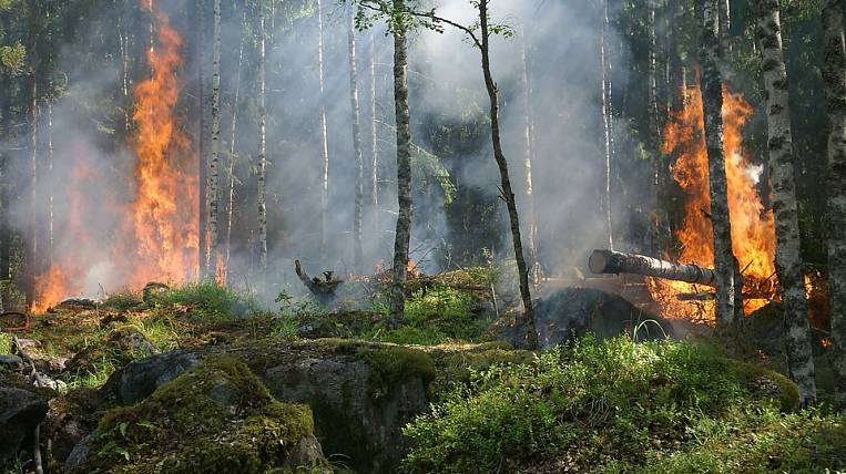 The regions of the Far East and Siberia accounted for 85% of the forest burnt in 2016 year