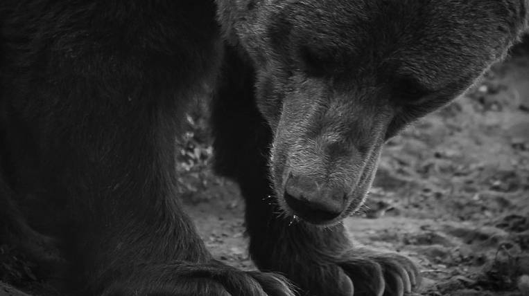 Bear attacked the workers of the lighthouse in Kamchatka