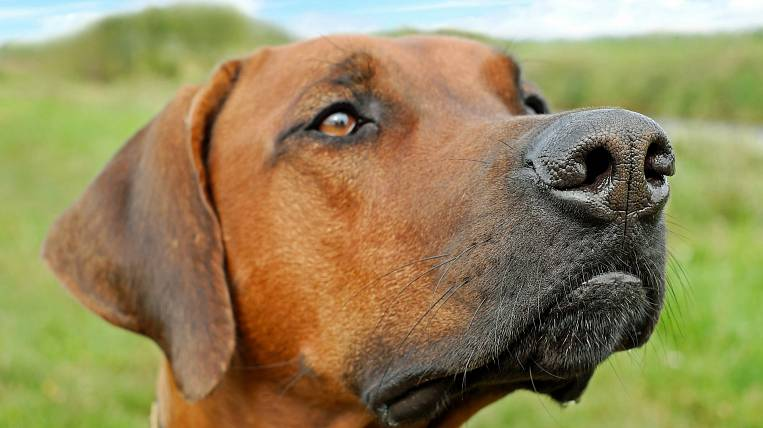 """Application for biometric identification of dogs will be released by """"Goznak"""""""