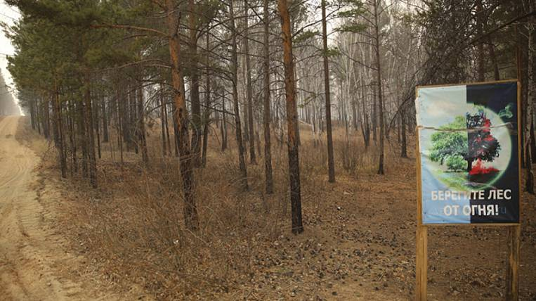 Illegal logging could cause forest fires in Transbaikalia