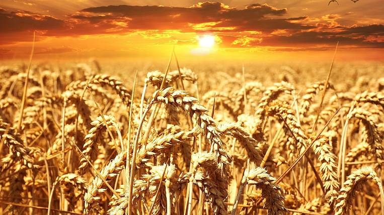 Transbaikal farmers sent a request for compensation for damage from drought to the Ministry of Agriculture