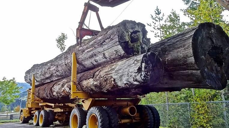 FEFD timber merchants will receive benefits due to coronavirus