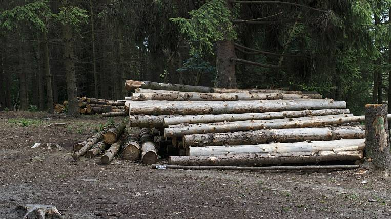More than 900 facts of illegal logging were recorded in the Angara region