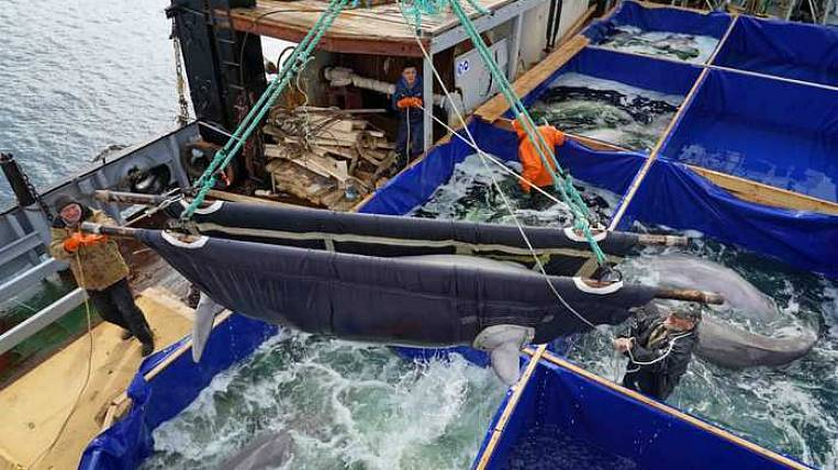The last whales from whale prison were released