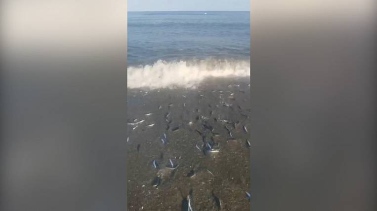Sakhalin residents catch capelin and herring with buckets right off the coast