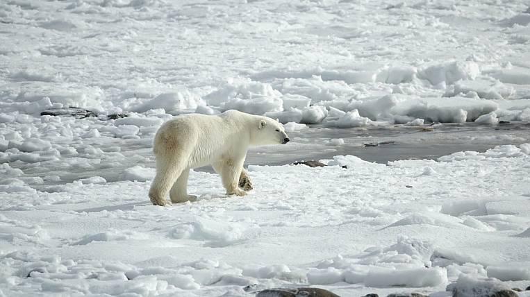 Arctic and Subarctic Development Center will be opened in Yakutia