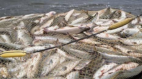 Fish Will Not Swim Away