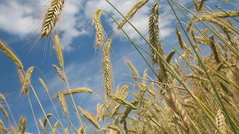 Grain terminal want to create in the Far East