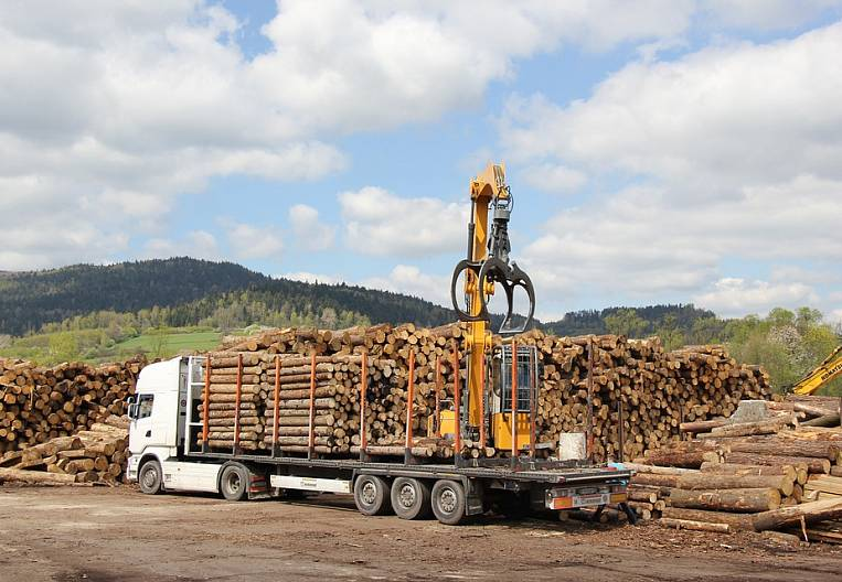 Dark forest: new losses declared by timber producers of the Far Eastern Federal District