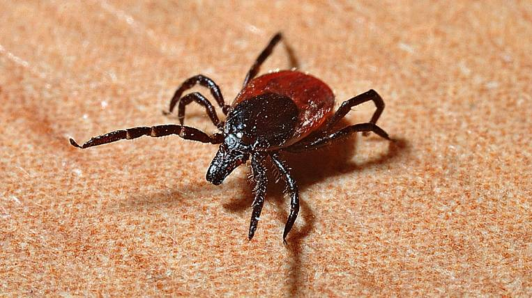New genus of ticks found in the Far East