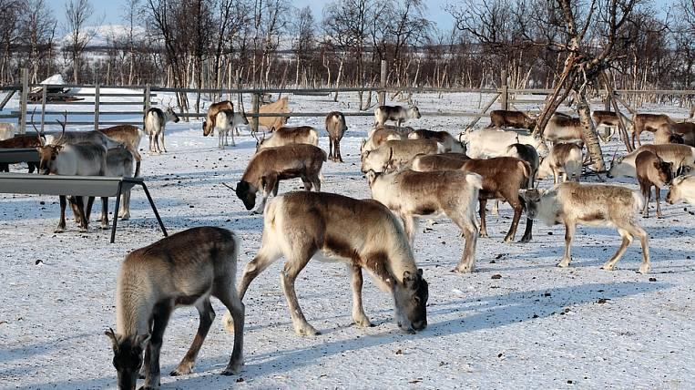 Breeders of Chukotka and Kamchatka will exchange experience