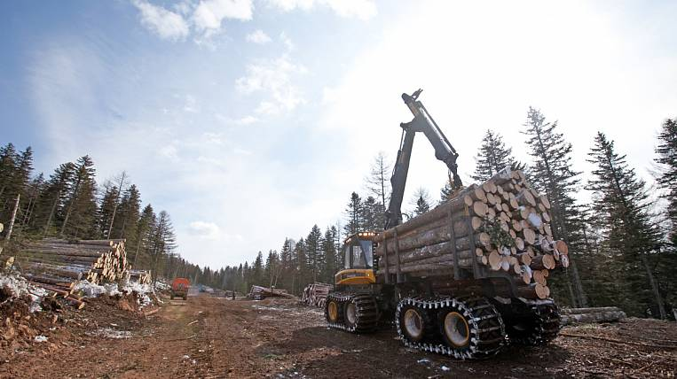 Court denies bankruptcy of Asia Forest by Chinese company