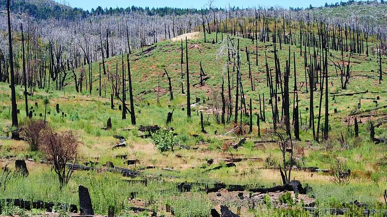 Rains extinguished part of forest fires in Yakutia