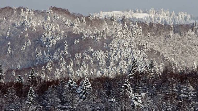 They refused to cut down the forest for housing development on Sakhalin