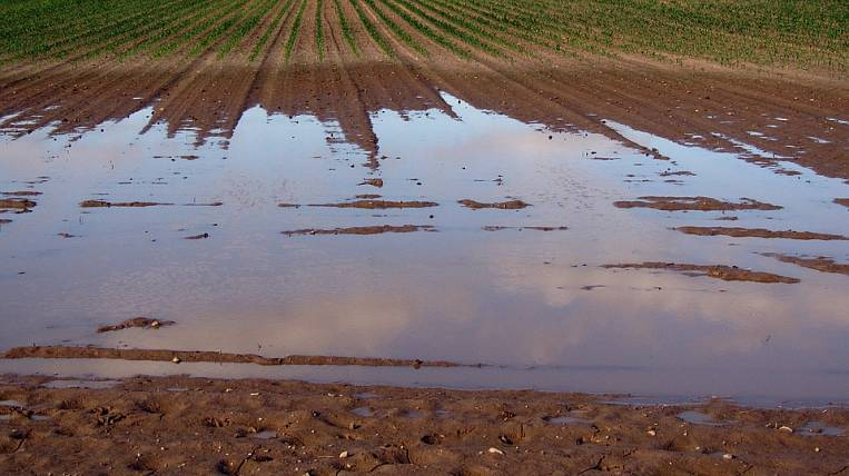 Agrarians of Khabarovsk Territory calculated flood damage