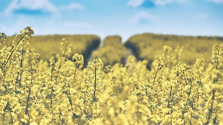Indian company intends to launch an agricultural project in Transbaikalia