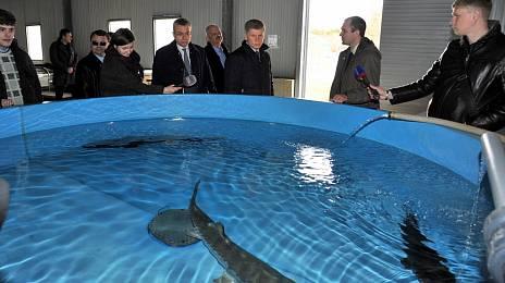 Fish interest