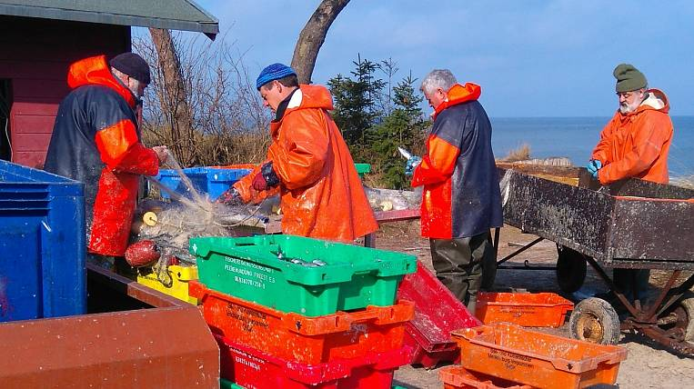 More than 400 thousand tons of pollock were exported from Primorye