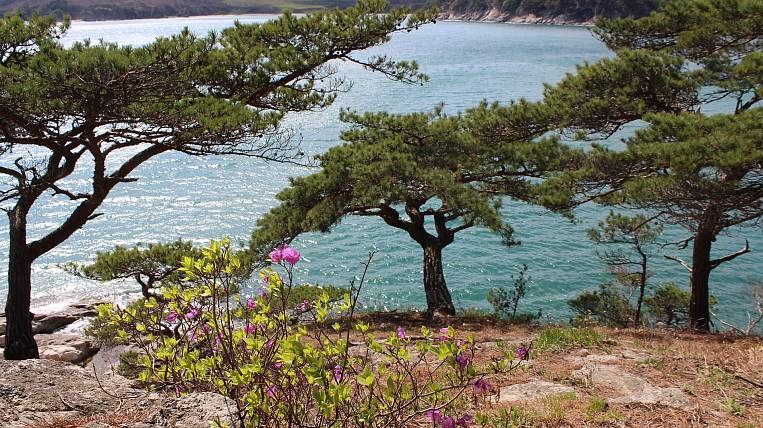 The volume of land for the Far Eastern hectare will increase in Primorye
