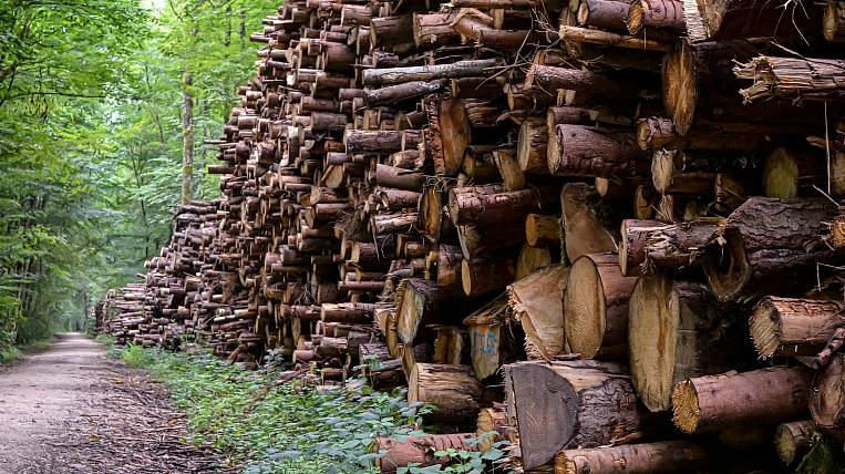Regions of Siberia and the Far Eastern Federal District became leaders in terms of the volume of illegal logging