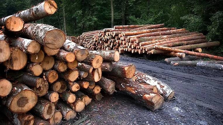 Half of illegal logging in Russia falls on the Irkutsk region